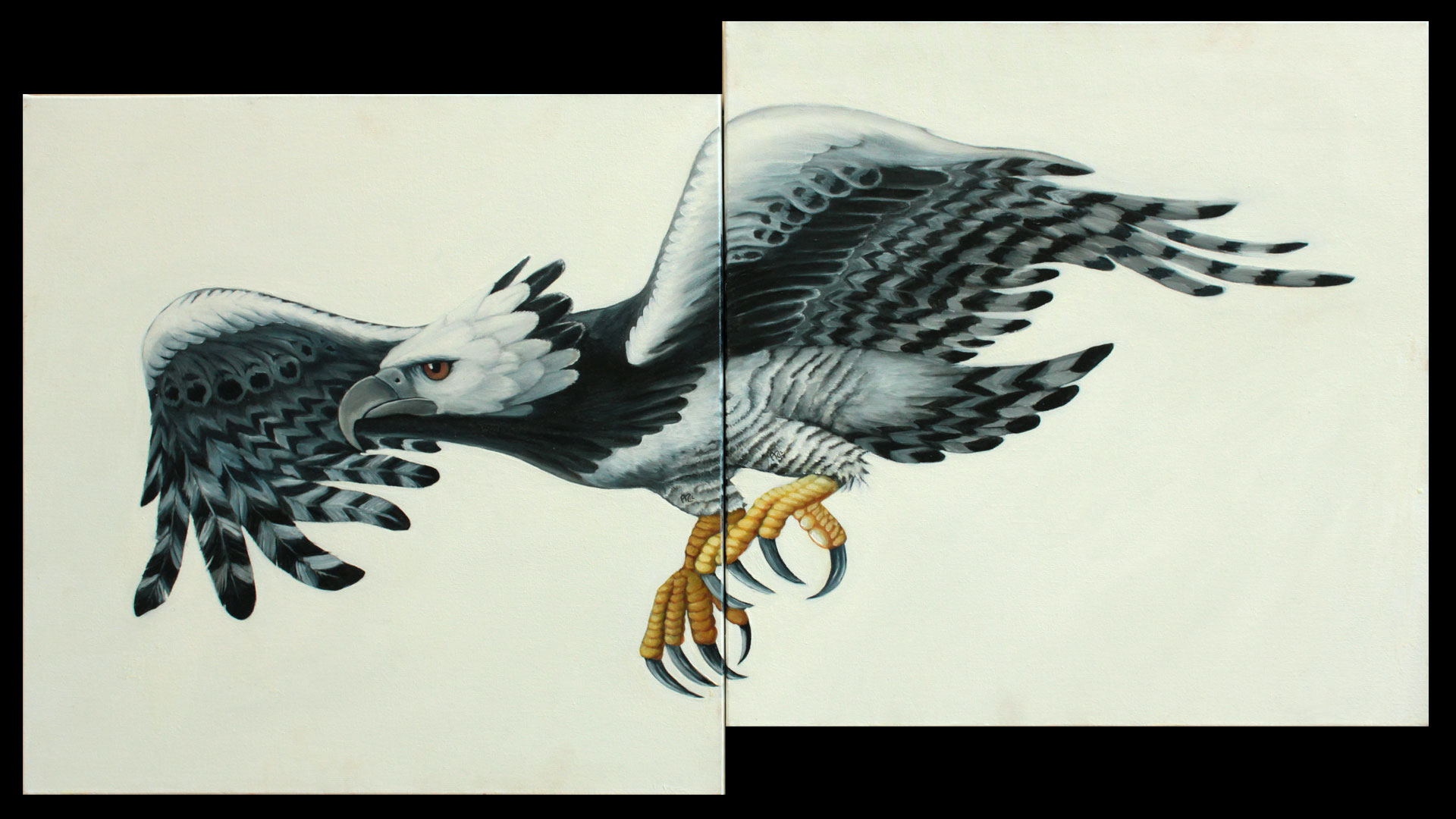 Águila Harpía