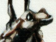 Dendrobates Auratus Variedad Capira