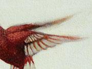 Colibrí Coroniblanco