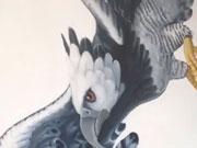 Águila Harpía – Proceso de Creación