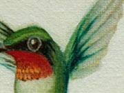 Colibrí Gorgirrubí